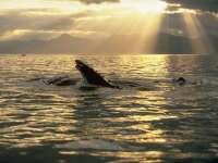 Baleines03.jpg