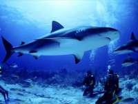 Requin01.jpg