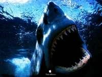 Requin02.jpg