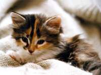Chatons n 01 chats boolsite - Chats gratuits ...