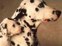 Dalmatien01.jpg