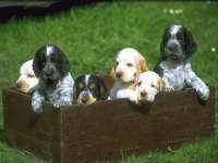 Dogs20.jpg