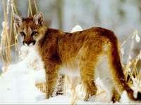 Felins05.jpg