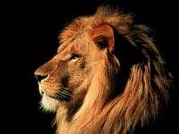 Lions02.jpg