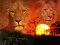 Lions03.jpg