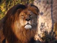 Lions09.jpg