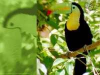 Oiseaux03.jpg