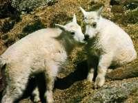 Moutons01.jpg