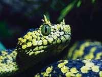 Serpent01.jpg