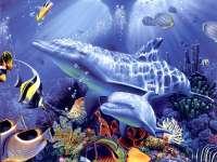 Dolphins011.jpg