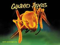 GuanoApes01.jpg