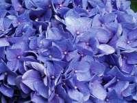 Fleur02.jpg