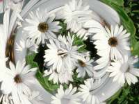 Fleur05.jpg