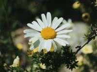 Fleur12.jpg
