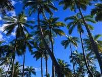 Palmiers01.jpg