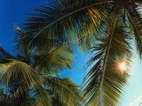 Palmiers04.jpg