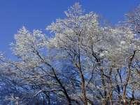 Paysages enneigés : neige n°07