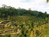Bali01.jpg