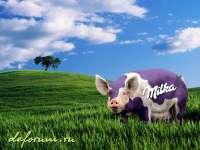 Milka-Cochon01.jpg